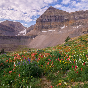 Timpanogos Basin by Ramsey Samara - Landscapes Mountains & Hills ( timpanogos basin, utah, mt. timpanogos, wildflowers, wasatch )