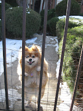 Photo: Kisses eagerly greets me at her gate