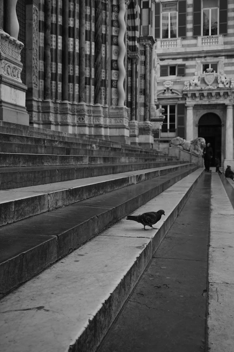 La prospettiva del colombo di Magendie