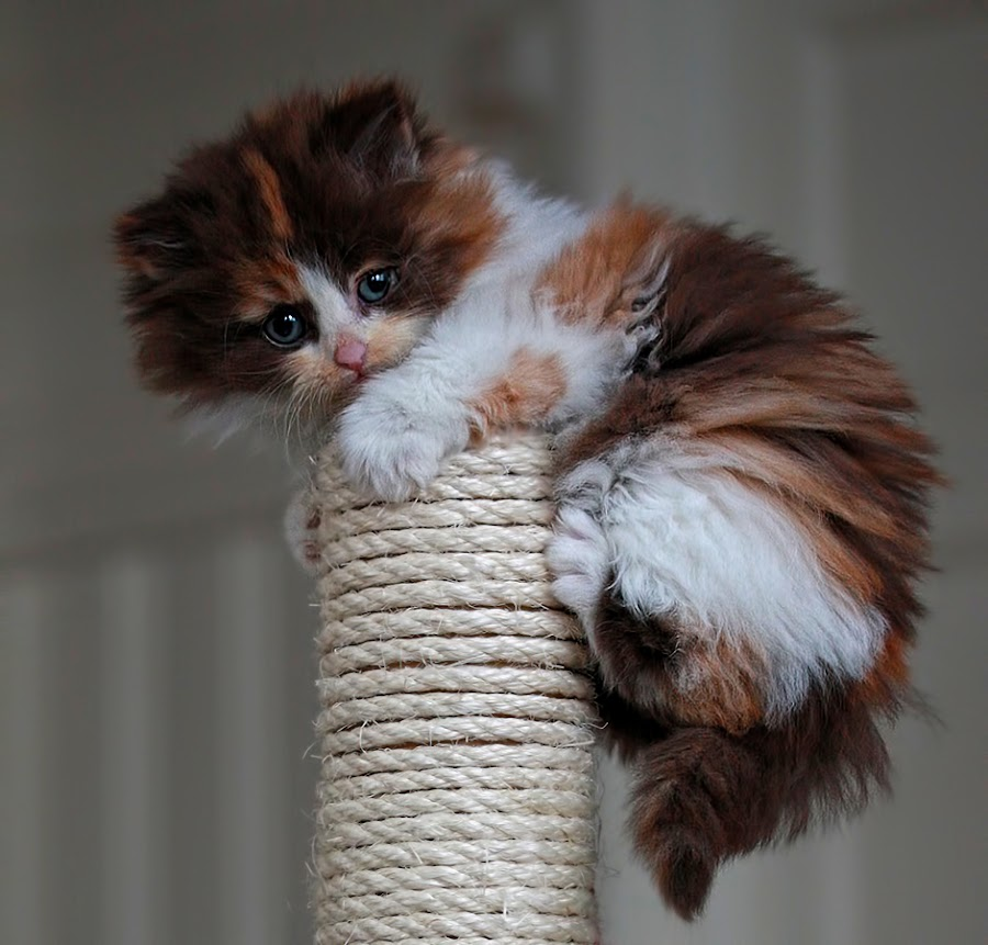 by Jane Bjerkli - Animals - Cats Kittens ( , baby, young, animal )