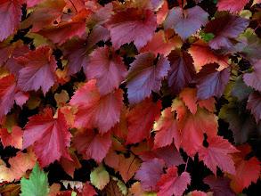 Photo: BGV visit 15 - Autumn leaves in Malvern - photo miltoncontact.com