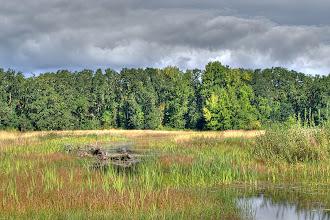 Photo: William L. Finley National Wildlife Refuge