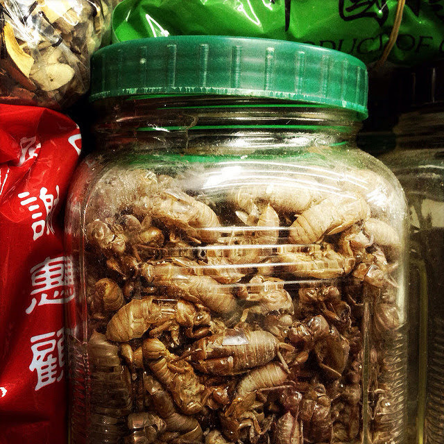 Chinese, Medicine, Cicada Shells, shop, 中藥, 蟬殼