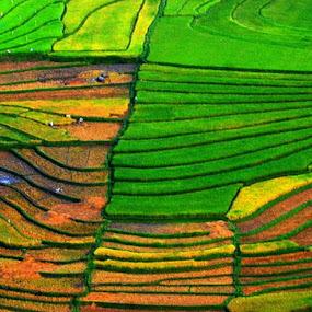 Balige rice fields by Taufiqurrahman Setiawan - Landscapes Prairies, Meadows & Fields