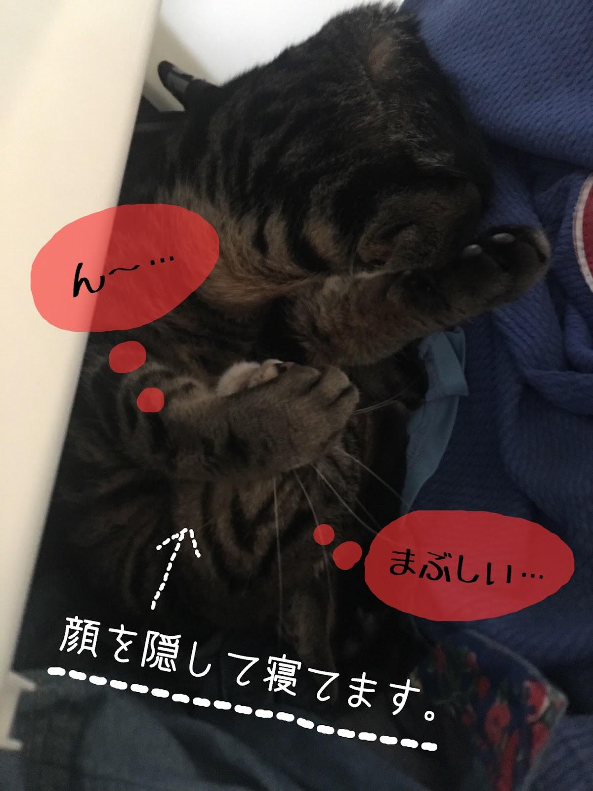 猫が顔をうずめて「ごめん寝」する理由