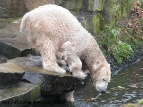 Photo: Dumm, er ist im Wasser gelandet ;-)