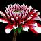 DSCN8216.jpg