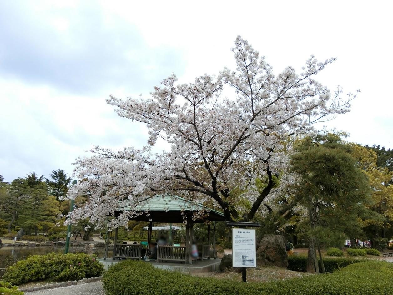 鶴舞公園 胡蝶ヶ池のさくら