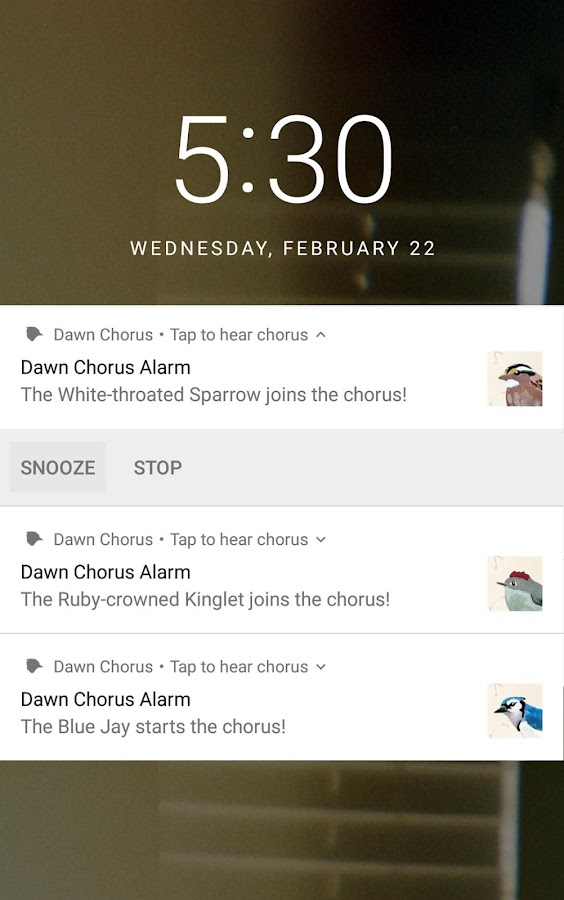 Dawn Chorus- screenshot
