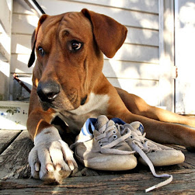 Man's best friend by Diane Hallam - Animals - Dogs Puppies ( shoes, sad, puppy, dog, master,  )