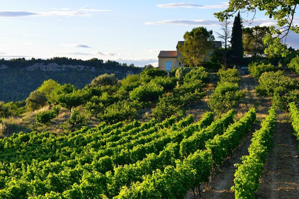 Вина Лазурного берега, вина Прованса