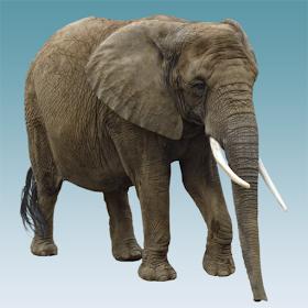Звуки слона