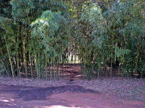 Photo: Secret Garden Within Bamboo