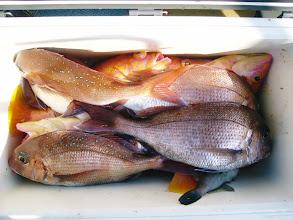 Photo: オダさんはアカイサキ多数で。 真鯛は6匹でした。