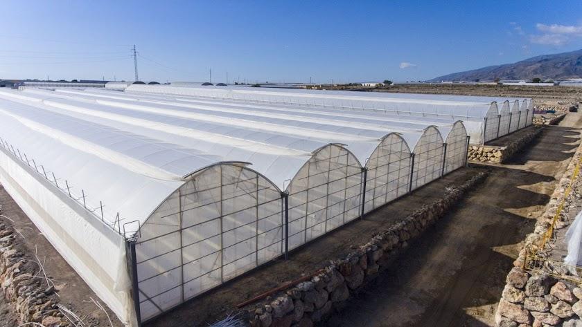 Los planes de modernización de los invernaderos andaluces es una linea estratégica para la administración.