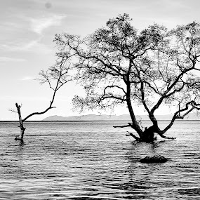 Tree in BW by Wahid Hasyim - Black & White Landscapes ( black and white, landscape,  )