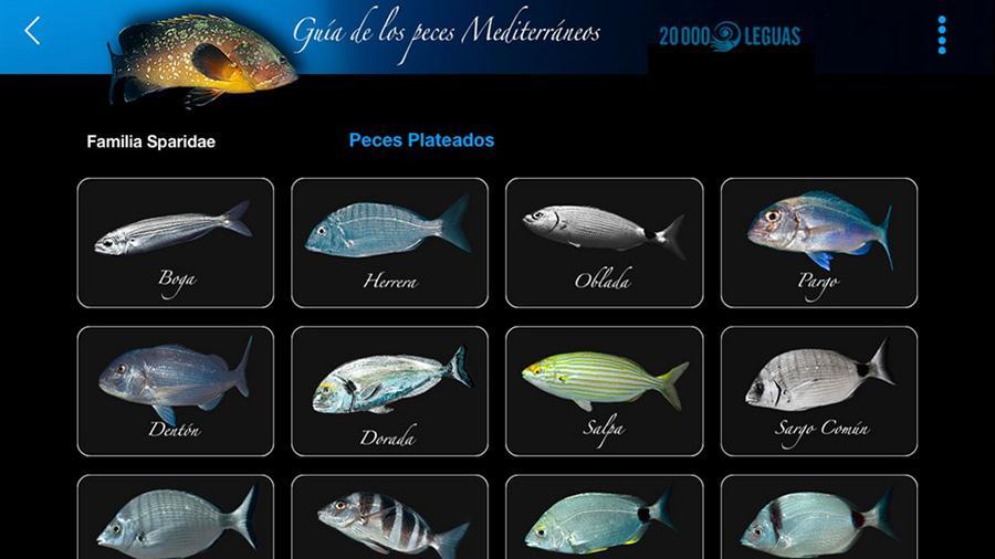 Gu a de peces del mediterr neo android apps on google play - Fotos de peces del mediterraneo ...