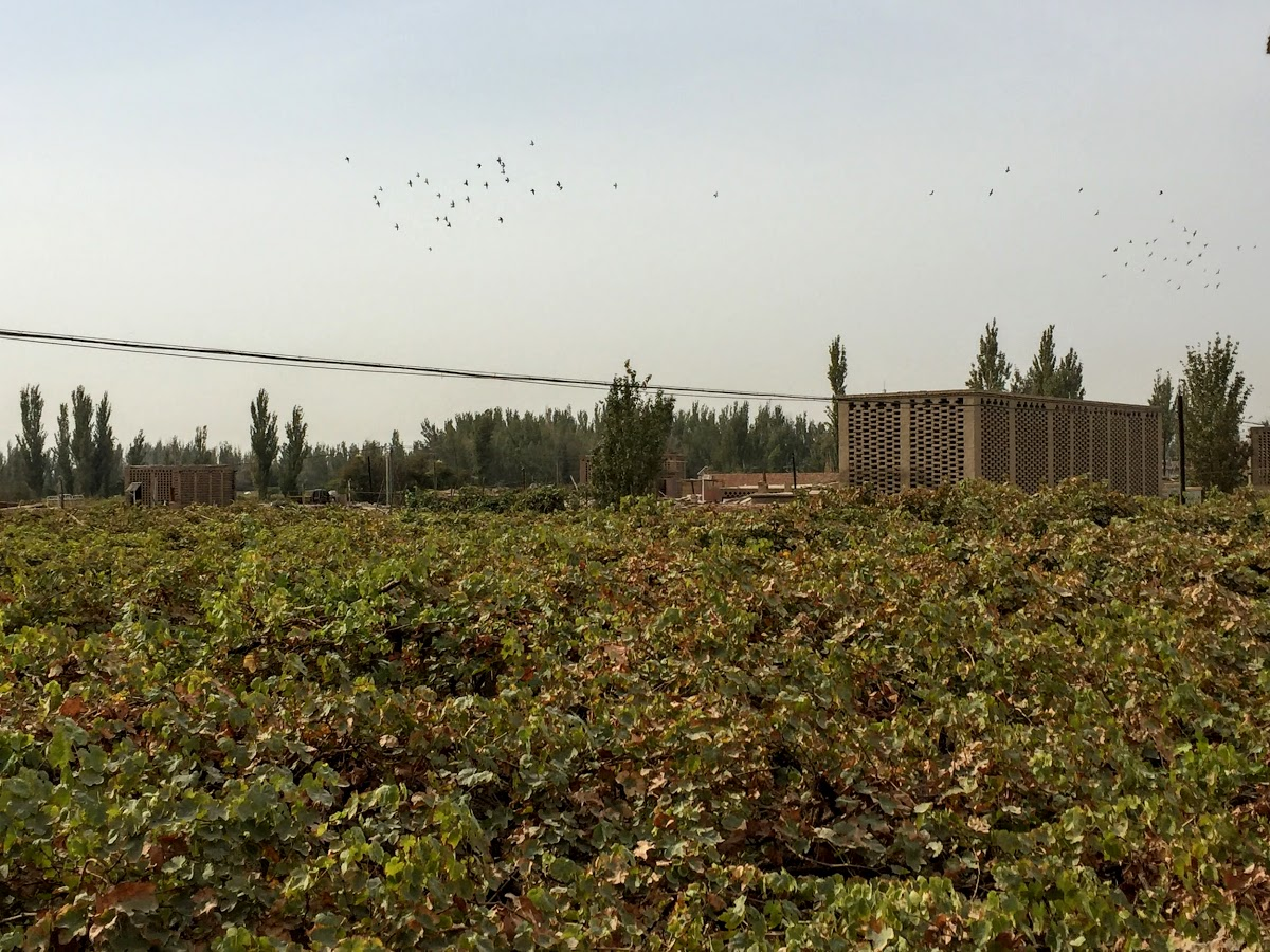 China. Xinjiang Turpan . Vineyards in Turpan