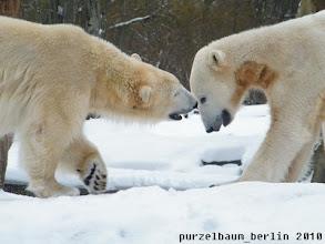 Photo: Gianna ist in Spiellaune - Knut auch :-)