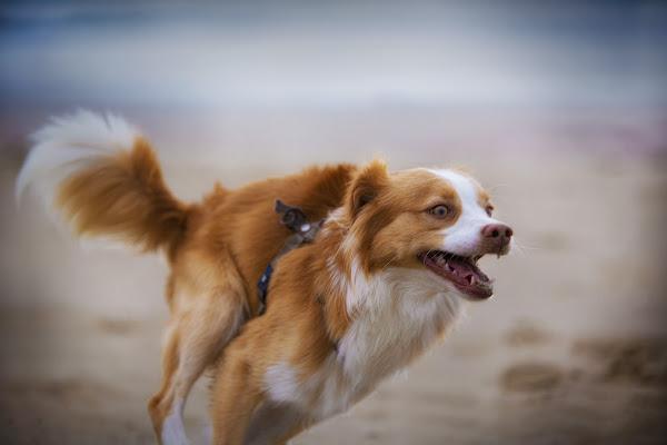 Corse sulla spiaggia di zsim67