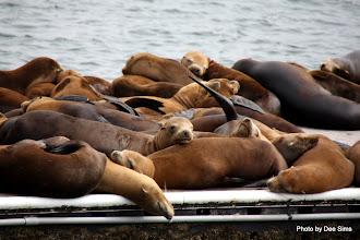 Photo: (Year 3) Day 20 - Seals Sunbathing