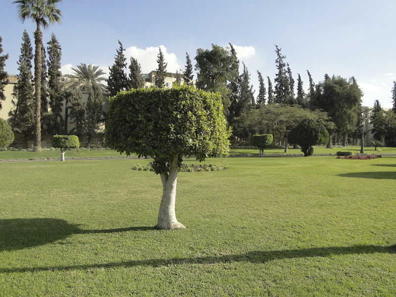 Photo: Palace Gardens are set on an area of 20 feddans (4,200m² or 1.038 acres)