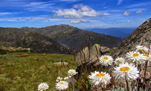 Alpine plants face 'bleak future' in adapting to warmer climate