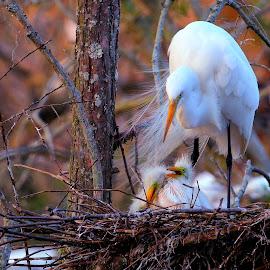 by Mike Vaughn - Animals Birds