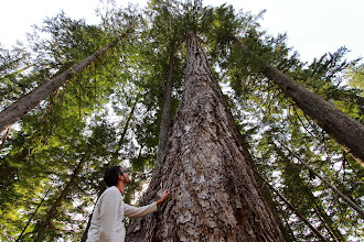 Photo: Wilderness Committee mapper Geoff Senichenko with old-growth Douglas fir slated for logging in the spotted owl wildlife habitat area at Clear Creek, up the east side of Harrison Lake, BC.