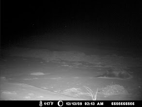 Photo: Elizabeth Islands - otter rolling on beach - Perhaps the camera temperature was reading incorrectly