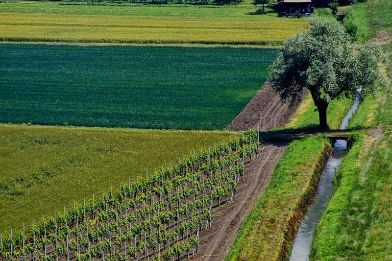 Angolo Agricolo di Silvano