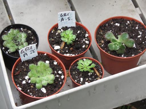 Mes petites plantes grasses et cactées - Page 2 F-51d0_DwGrfLnEbPrHZiIInyjvf6AW9rUPElyewcBGhijZHrMhRtKfMOlJVySctjl54Rp_TvOzEbgbvdpkUGtFw2oIdN9uZgXCWB_P-LkvLWiF6okpcJvLicMrSRFJAl9fghxE
