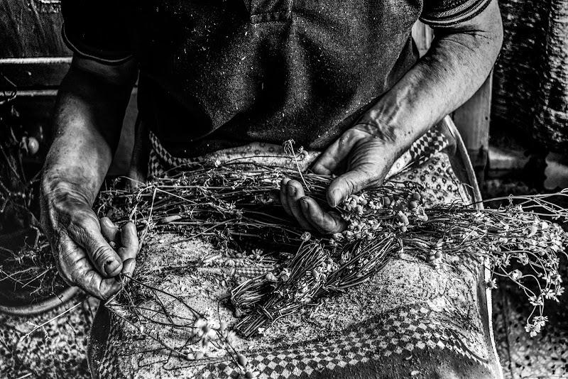 Camomilla vintage di teresa Lardino