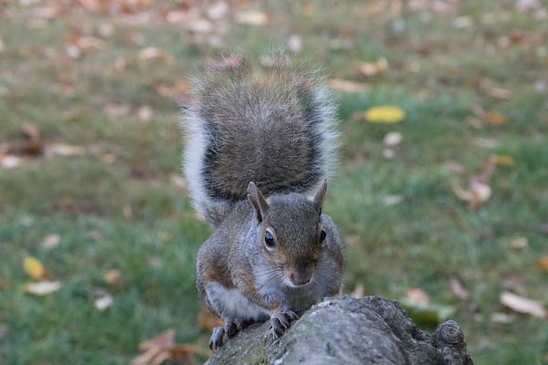 mi presento, sono lo scoiattolo di Mistista