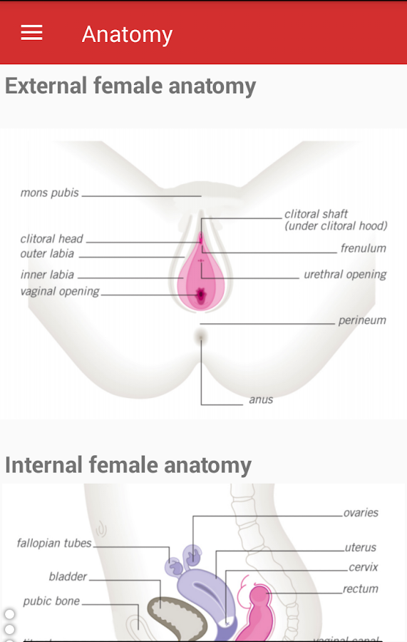 sexual anatomy surveys