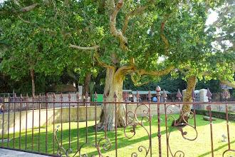 Photo: Jéricho, un arbre!