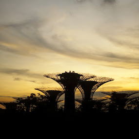 Supertrees Silhouette by Han Yi Li - Novices Only Landscapes ( supertrees, silhouette, sunset, gardens by the bay, singapore )