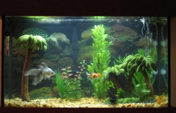 Aquarium decoration ideas android apps on google play for Decoration poisson aquarium