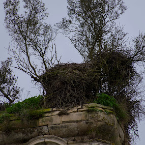 Mosteiro de Seiça by Edu Marques - Buildings & Architecture Decaying & Abandoned ( old house, old, nest, ruins, nests, animal )