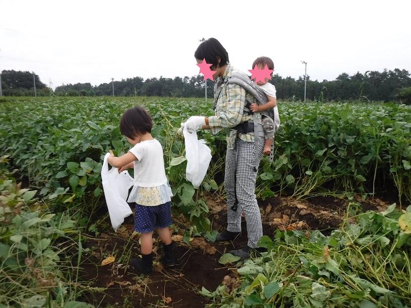 借金なし大豆の枝豆を収穫