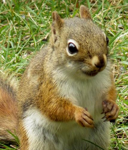 by Christine Godard - Novices Only Wildlife ( breed, wild, strange, cat, amazingworlds, pet, backyardmarvels, dog, weird, animal, Dogs, Cats, Pets, Rabbits, Animals, livestock, cows,  )