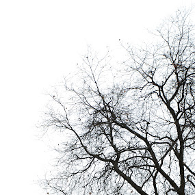 Waiting for Shine by Bharath Booshan - Nature Up Close Trees & Bushes ( snow, cloudy )