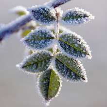 Photo: Frost, Birling