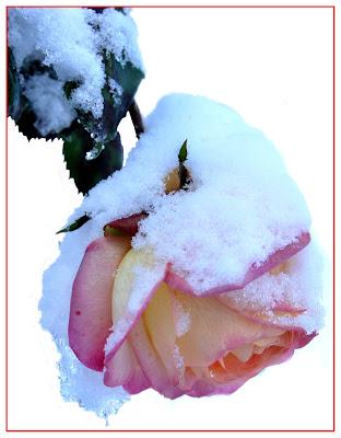 Sotto la neve di Tacca