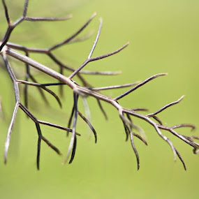 Little Branch by Angela Wescovich - Nature Up Close Trees & Bushes