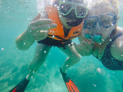 Explore the underwater world at Shark Point