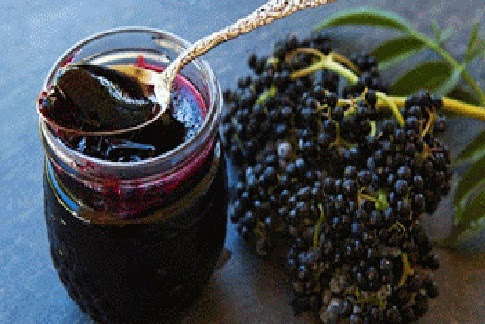 """Elderberry Extract: Nature's """"Tamiflu"""""""