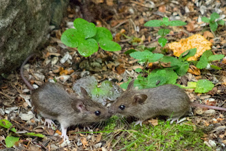Photo: Mouse siblings
