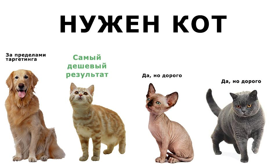 C:\Users\Шама\Desktop\99-animals-cat-2.jpg