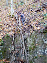 Photo: Brian pushing the branch from above the entrance